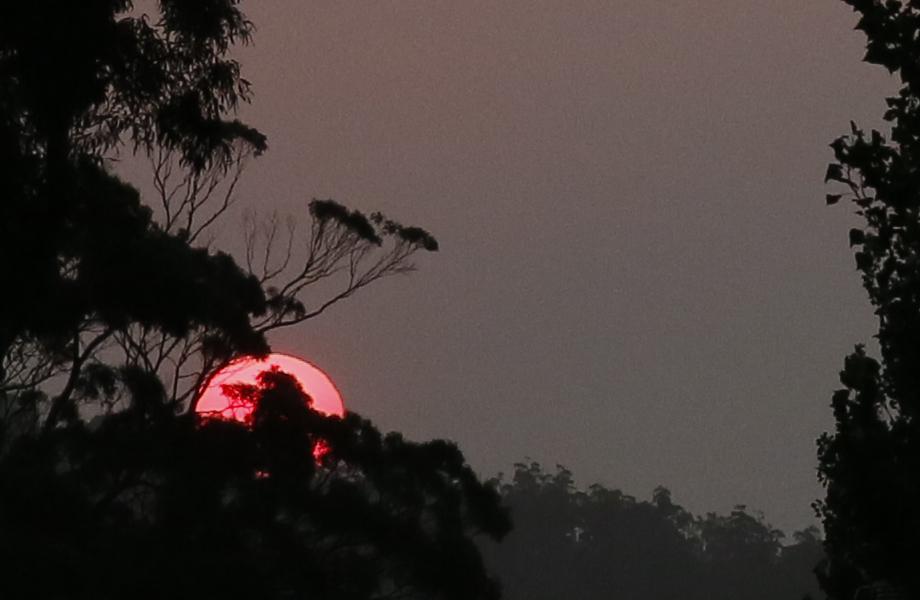 bushfire sun by Daniela Brozek