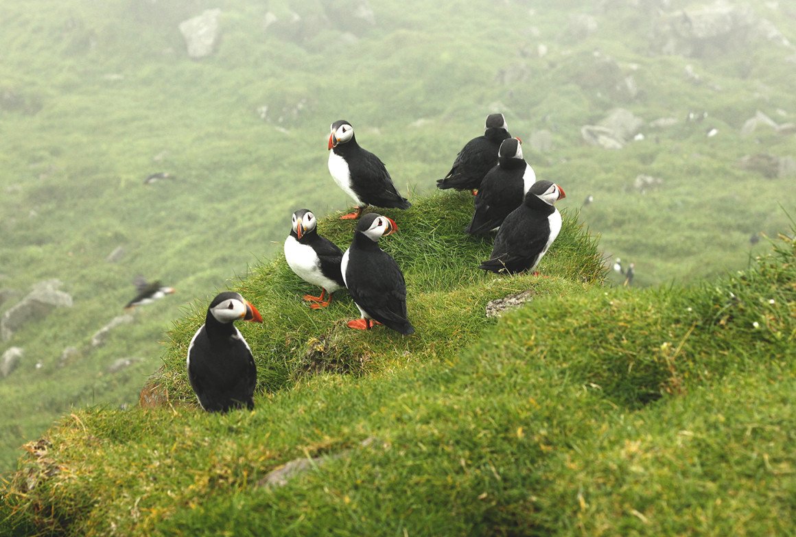 Puffins Faroe Islands Shing Lin Yoong