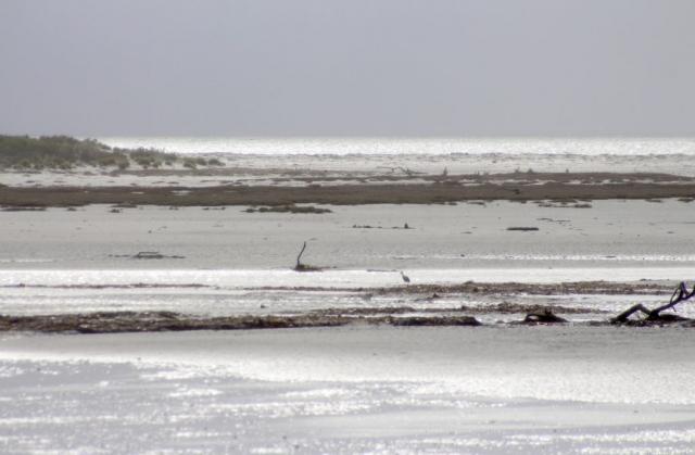 Coastal glimmer