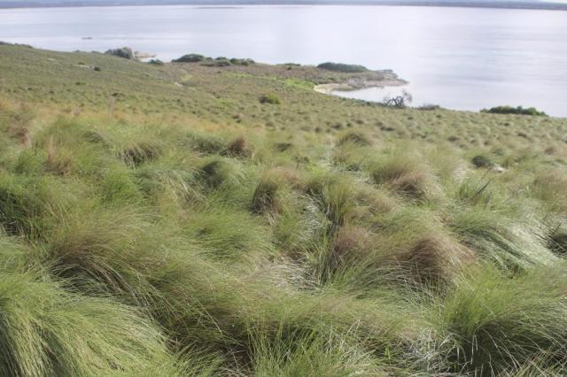 Furneaux Islands